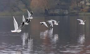 Lakefront Bird Deterrent Options – Boat Lift Blog